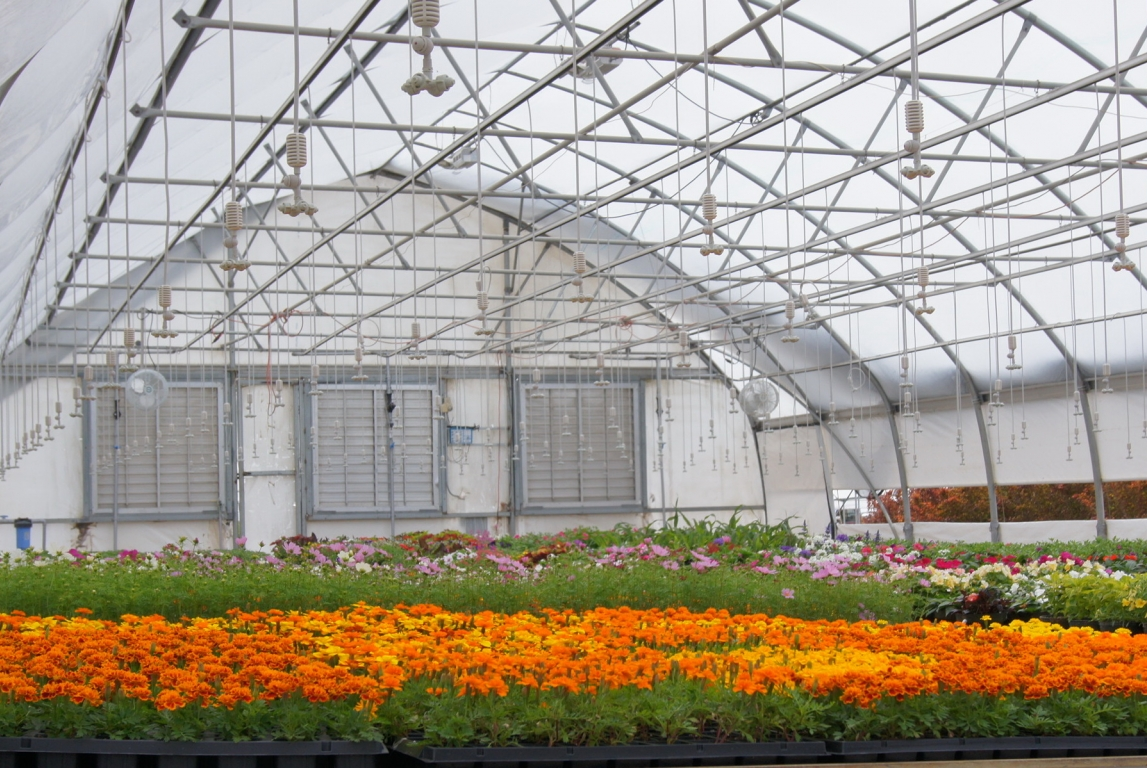 Commercial Greenhouse North Slope
