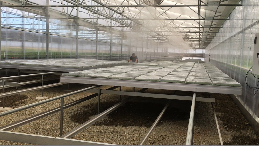 Fog systems - Cooling systems, Commercial Greenhouse Equipment