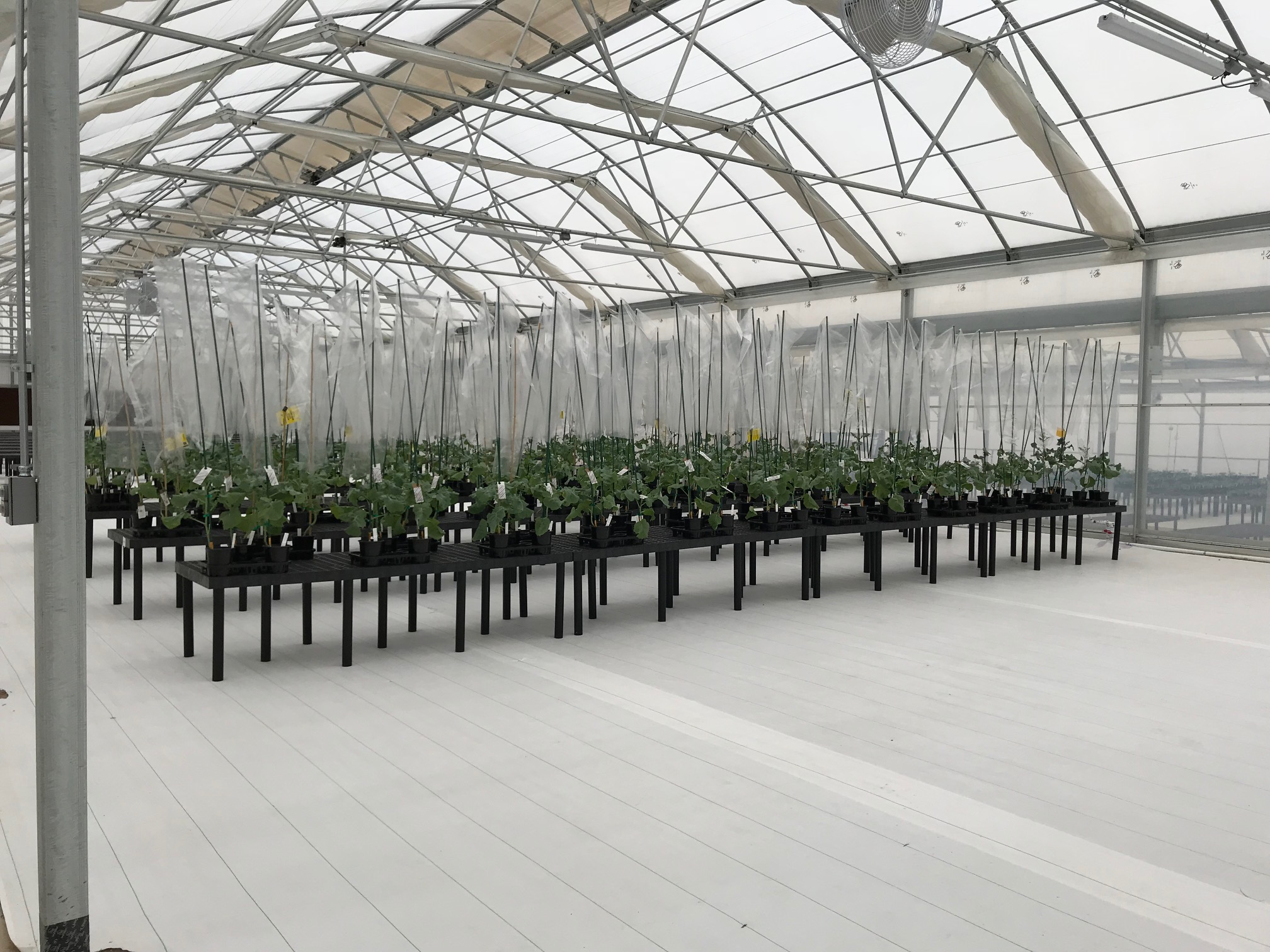 Leichtag Common's New Greenhouse Project | Commercial Greerhouse Manufacturer