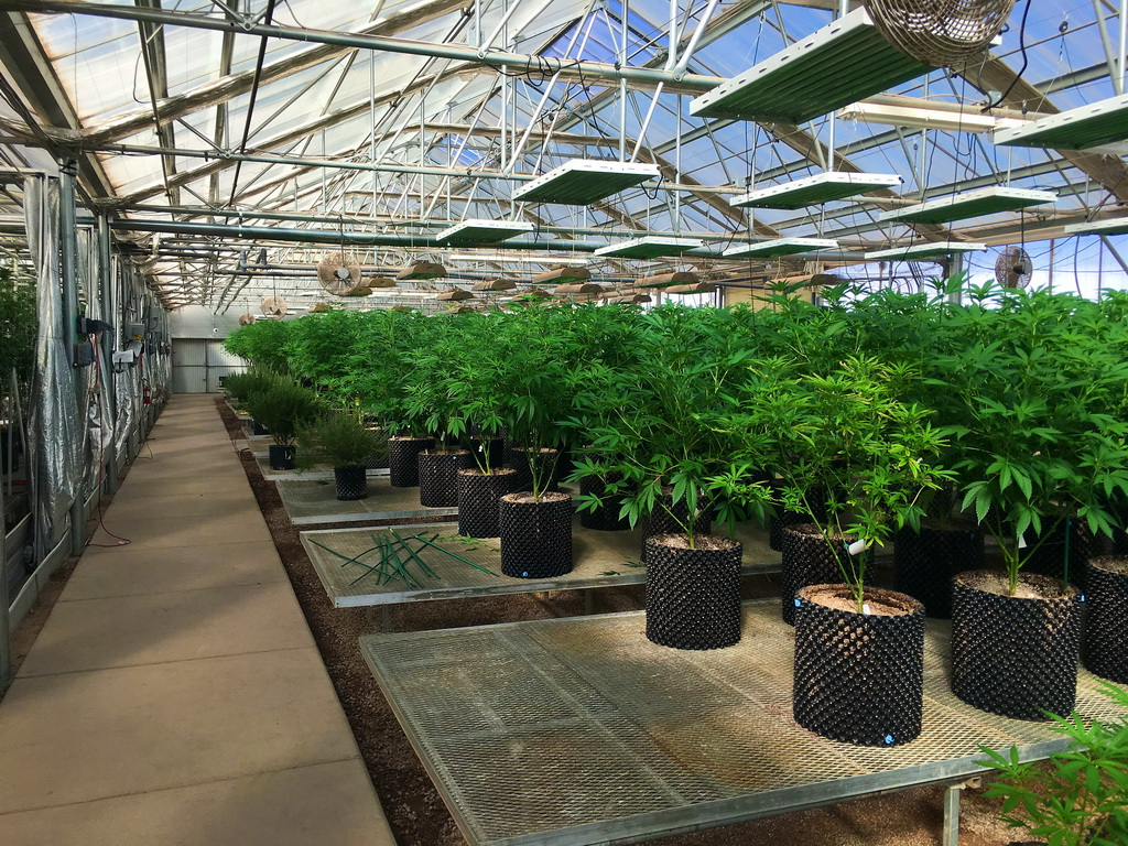 Ultra Health - New Mexico's largest medical cannabis business grows with Agra Tech Greenhouses | Agra Tech