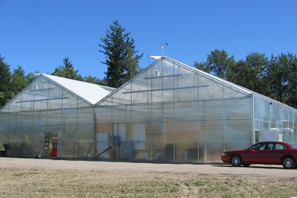 McPhail Farms | Tomatoes greenhouse