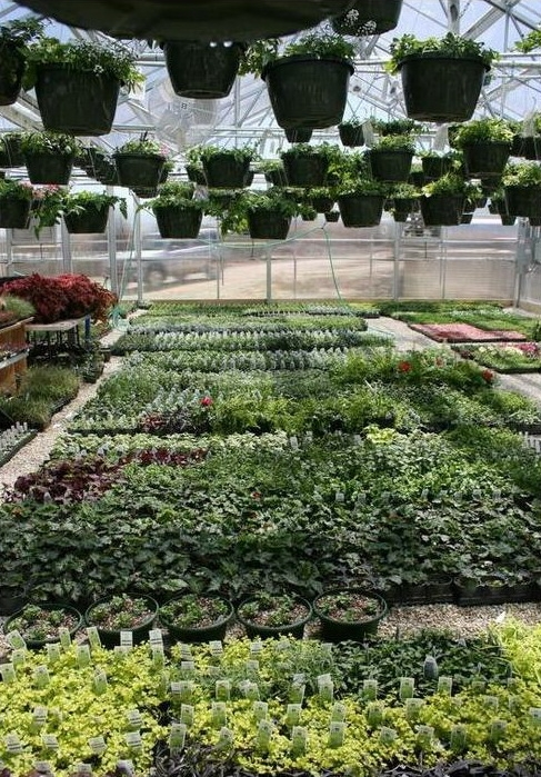 Lake Area Industries   Commercial Greenhouse Manufacturer