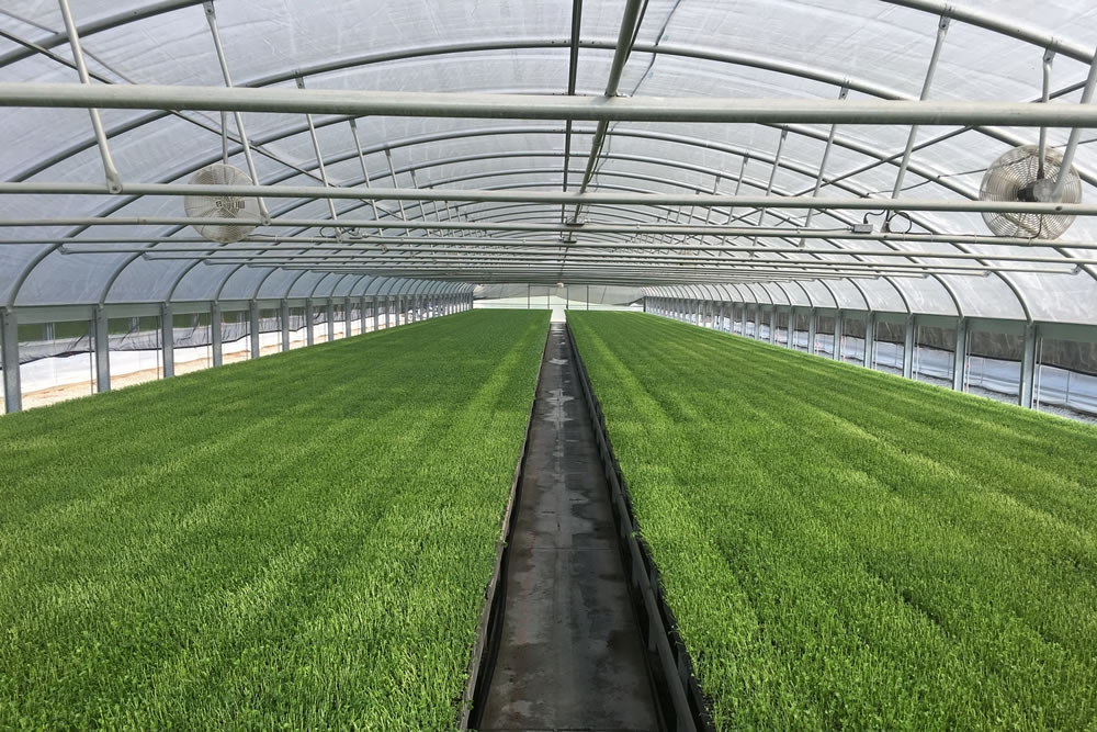 Agra Tech Thermolator 35 greenhouses | Commercial Greenhouse Manufacturer