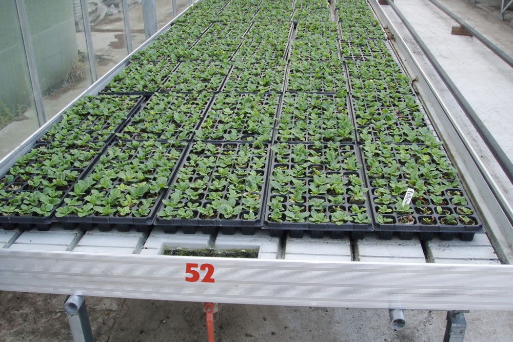 Agra Tech Ebb and FLow Bench | Commercial Greenhouse Manufacturer