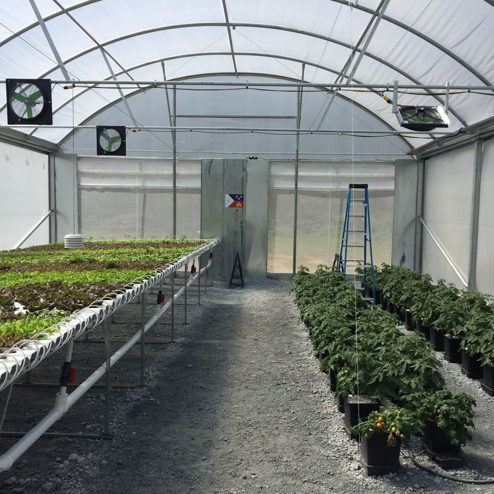 Inside Agra Tech Insulator 30 greenhouse with NFT Hydroponics and Vine crops | Commercial Greenhouse Manufacturer
