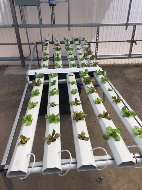 on-site greenhouse | in-ground farming | Agra Tech