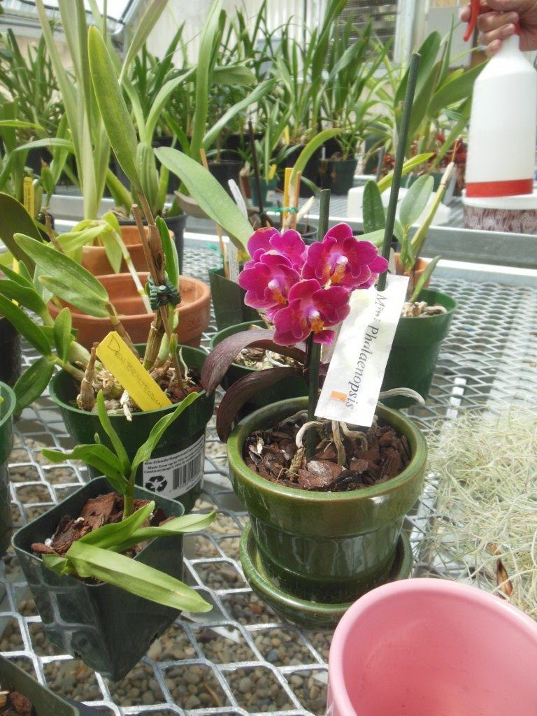 Happy orchids | Commercial Greenhouse Manufacturer