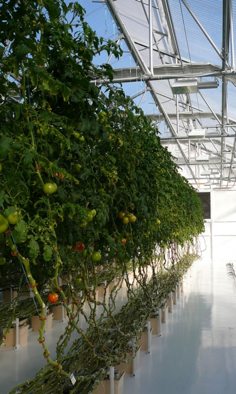 Vine Hydroponic Greenhouse Systems | Vegetable Production | Vegetable Greenhouse Systems