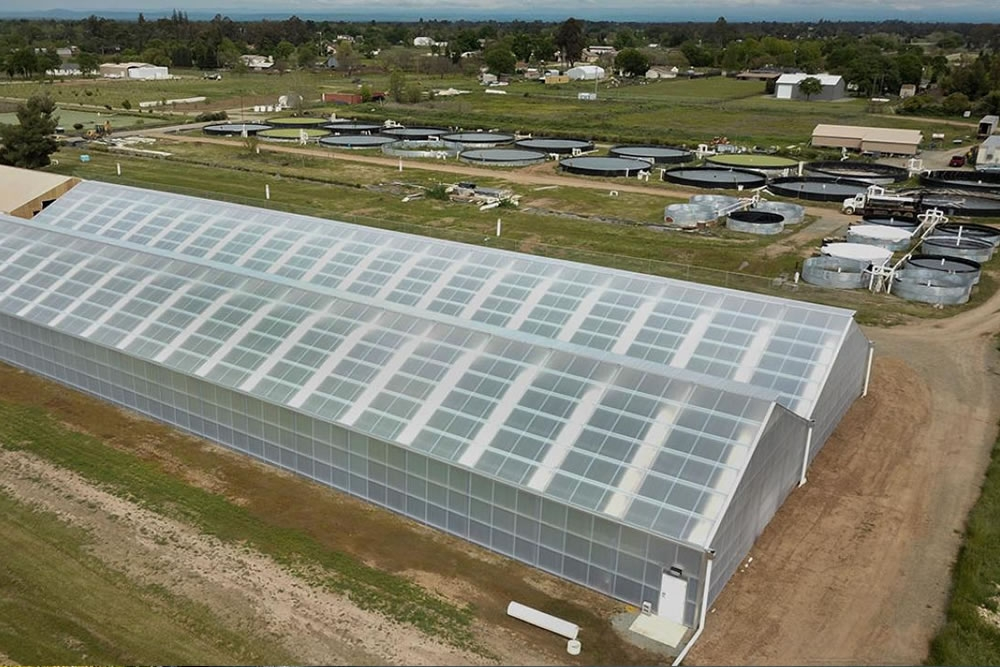 Inside these 24,000 square-foot greenhouses thousands of heads of butter lettuce are grown, fertilized by recycled fish waste on Tsar Nicoulai's aquaponics farm.