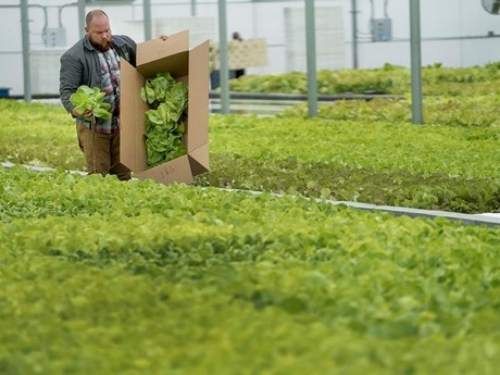 Aquaponics systems are creating new opportunities for farmers, and when used properly, can increase local food production.