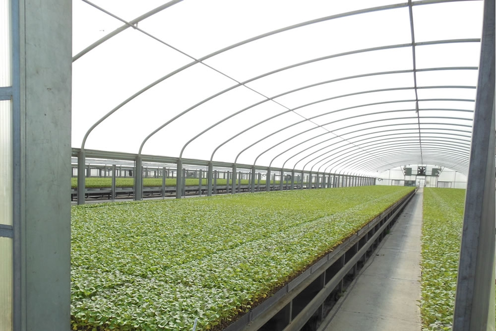 Thermolator 35 greenhouse, Long benches | Commercial Greenhouse Manufacturar
