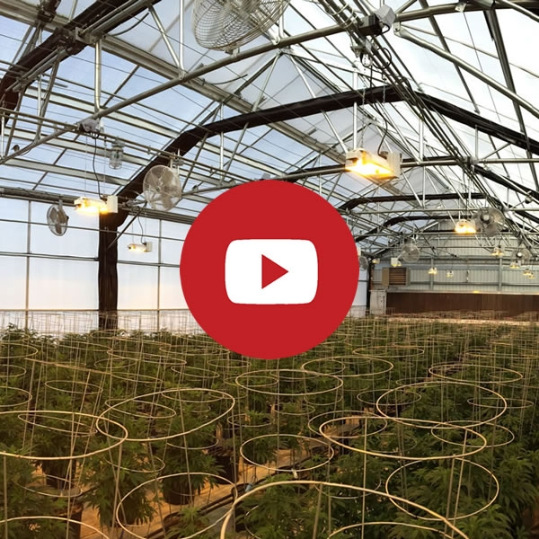Agra Tech Equinox Light Dep curtain in Solar Light | Cannabis Production