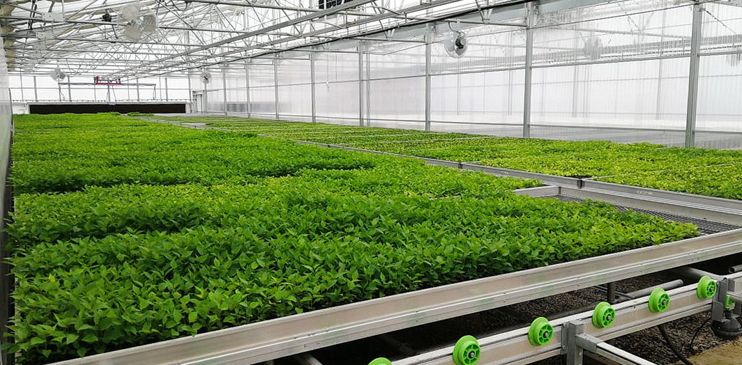 Green Nova Nursery | Agra Tech