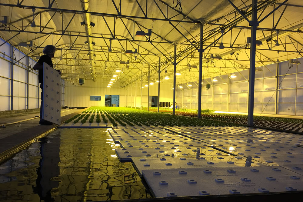 Brightwater Farms Doubles Capacity with New ATI Greenhouse | Commercial Greerhouse Manufacturer