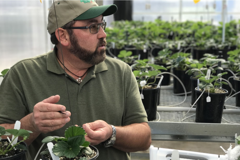 "California Berry Cultivars is a World-Class ""Strawberry Start-Up"" 