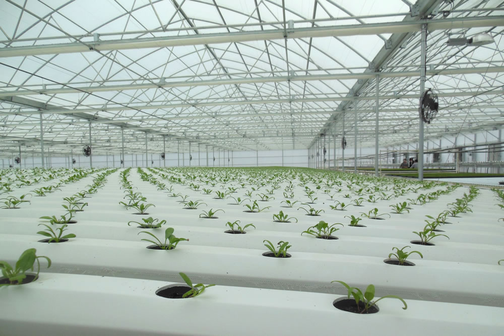 Go Green Agriculture Goes with Agra Tech Greenhouse | Agra Tech