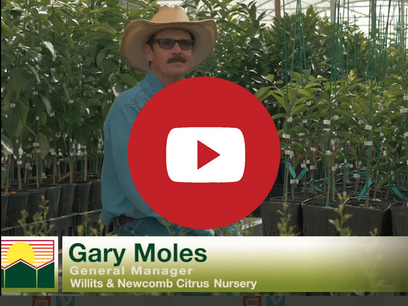 Willits & Newcomb | Commercial Greenhouse Manufacturer