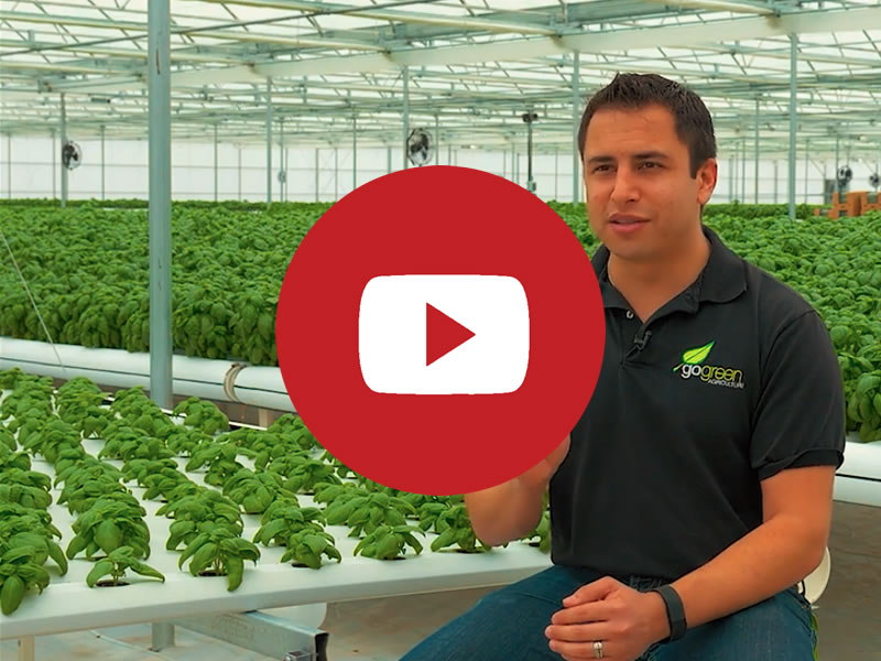 GoGreen | Commercial Greenhouse Manufacturer