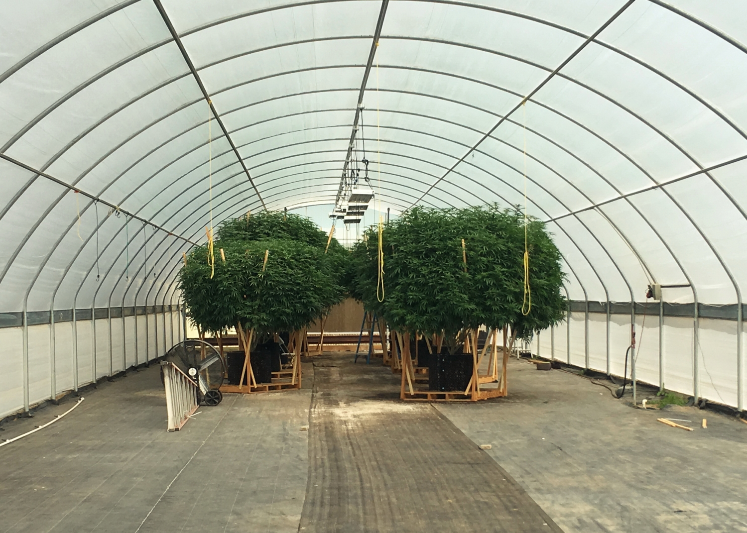 Existing Agra Tech Thermolator greenhouses