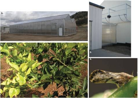 Citrus budwood grown in positive pressure greenhouses keeps pests