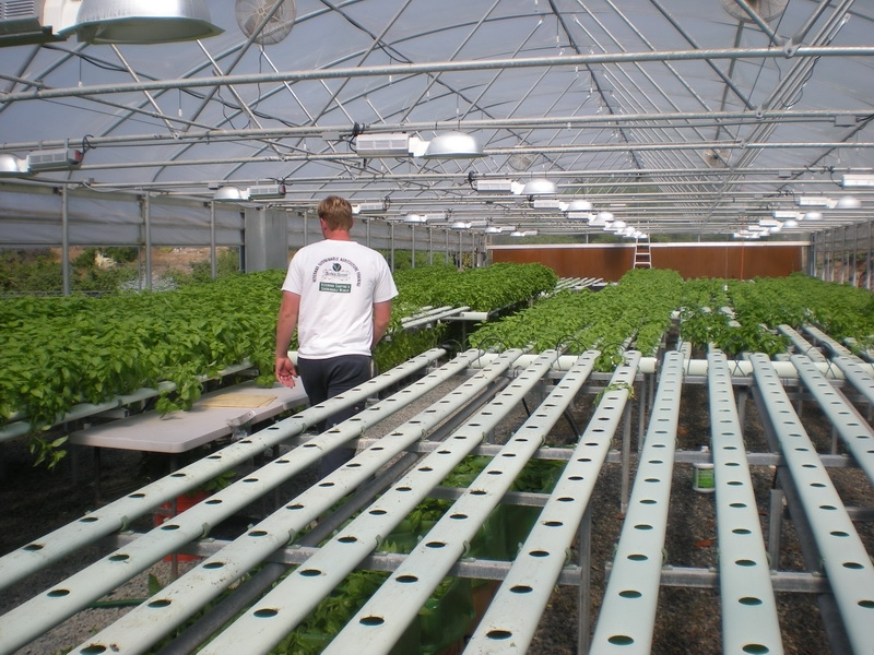 Solar Light | Commercial Greenhouse Manufacturer