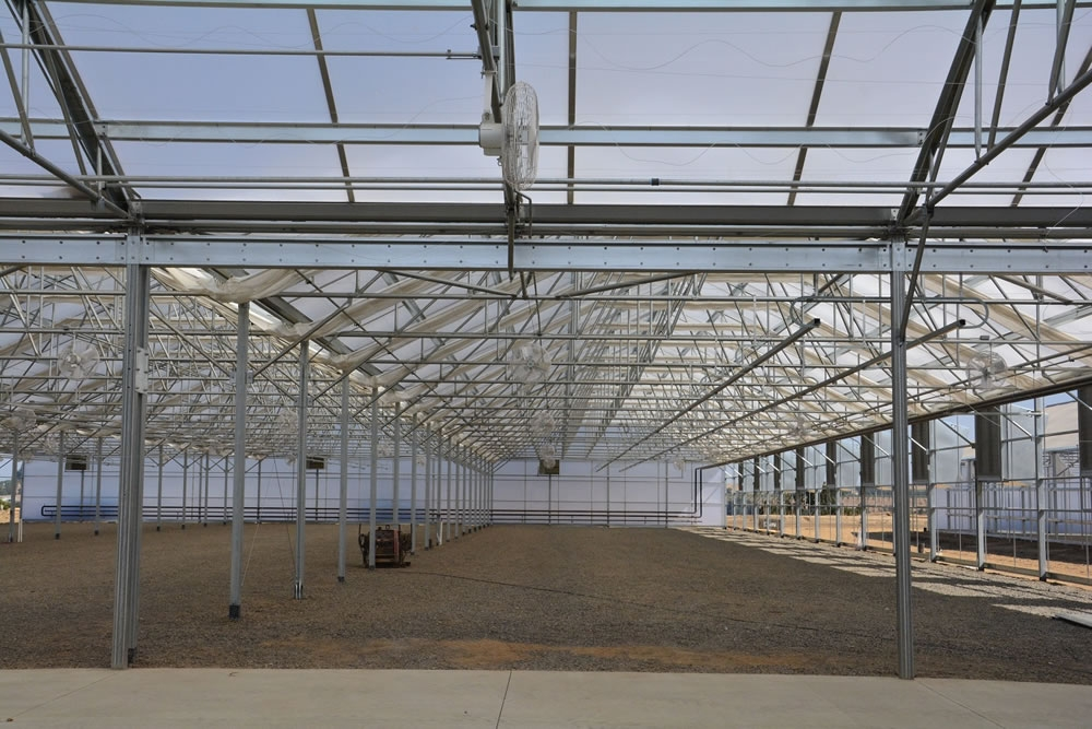 View from headhouse into the Solar Light 42 greenhouses | Commercial Greenhouse Manufacturer