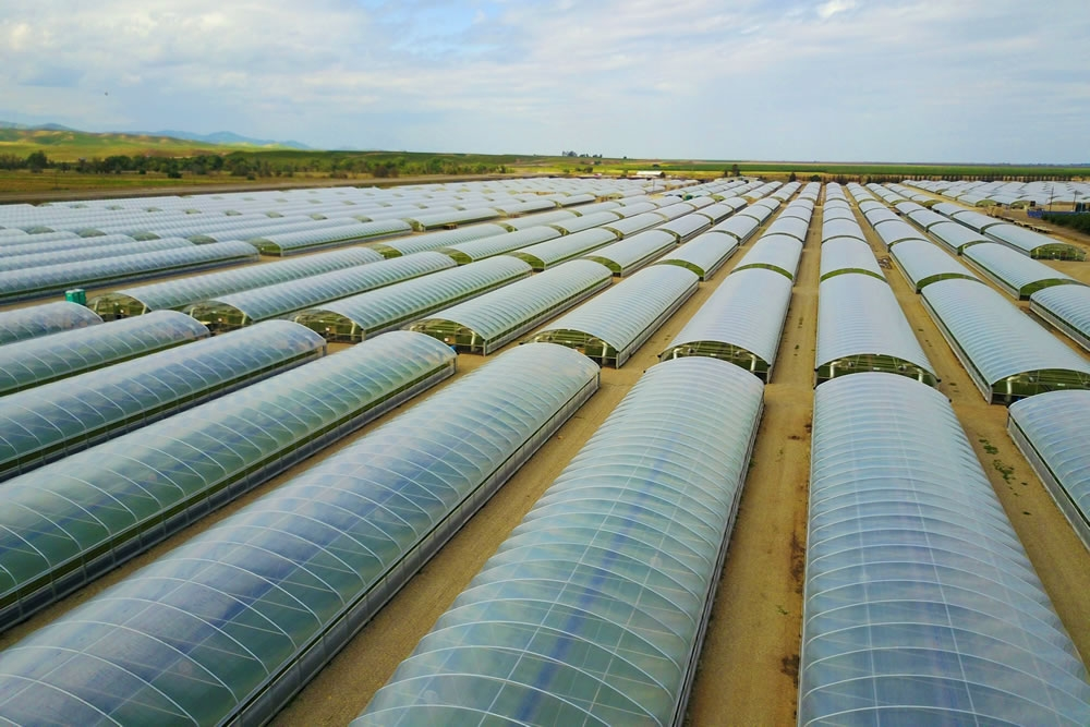 Greenhouse Plastics | Commercial Greenhouse Manufacturer