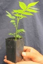 High quality trees at Micro Paradox | Commercial Greenhouse Manufacturer