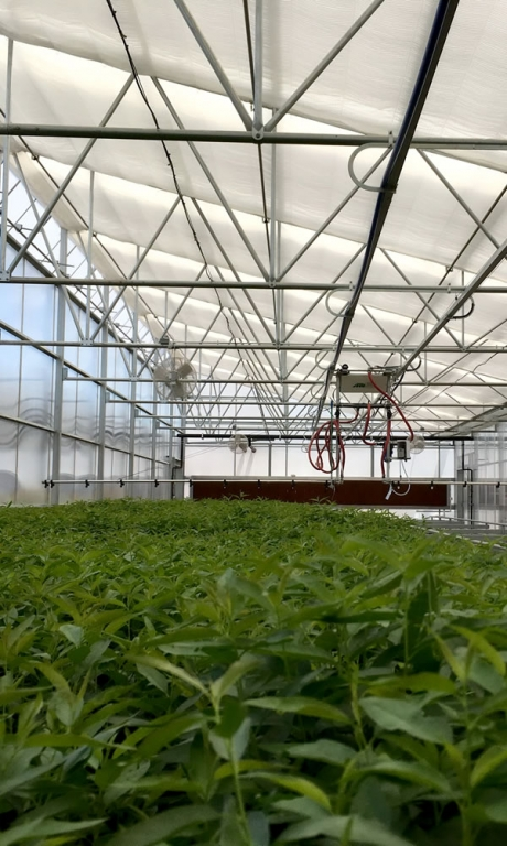 Vegetable Production | Commercial Greenhouse Manufacturer