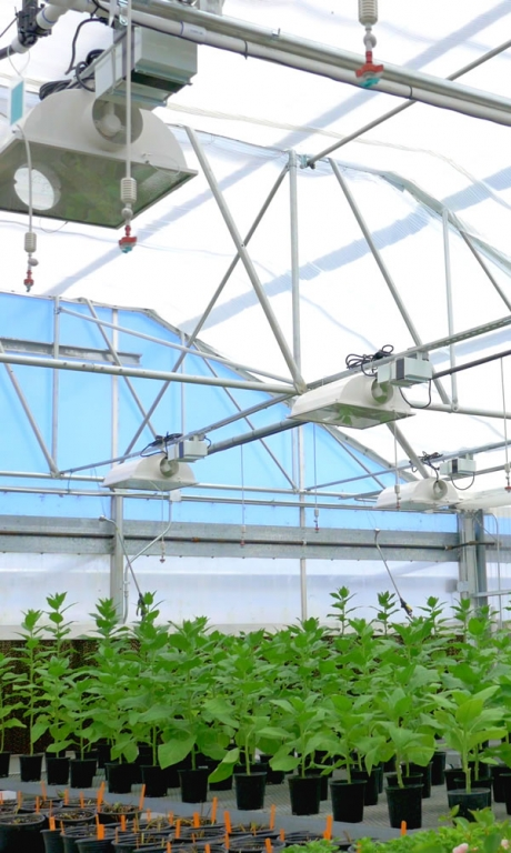 Greenhouse Catalog Request | Commercial Greenhouse Manufacturer