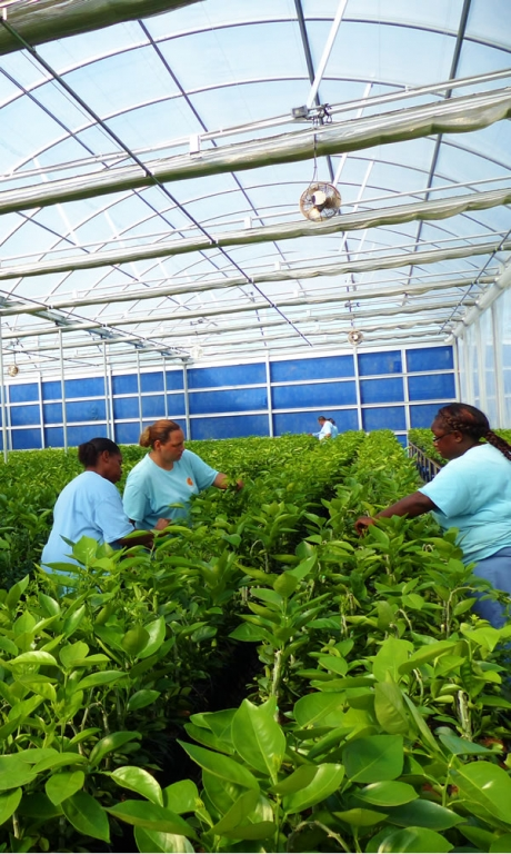 Greenhouse Quote Request | Commercial Greenhouse Manufacturer