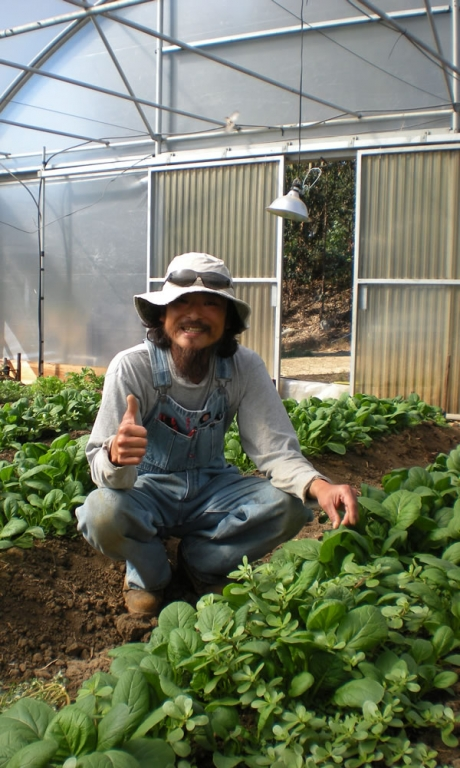In Ground Greenhouse | Vegetable Production | Vegetable Greenhouse Systems