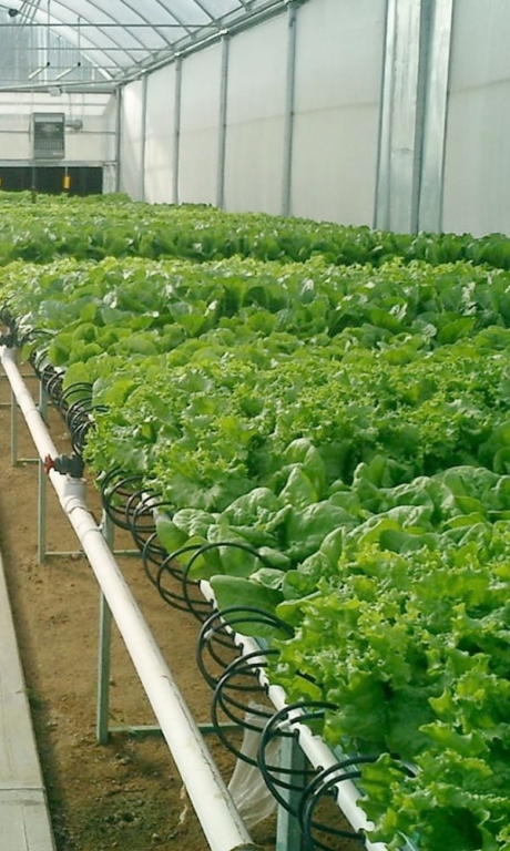 Nutrient Film Technique hydroponics | Vegetable Production | Vegetable Greenhouse Systems