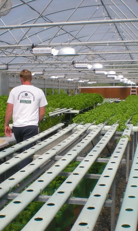 Vegetable Production | Vegetable Greenhouse Systems | Commercial Greenhouses Manufacturer