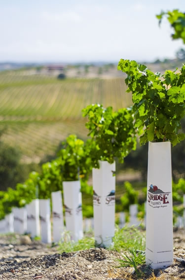 Sunridge Nurseries Plays a Huge Role in the Wine Industry Worldwide