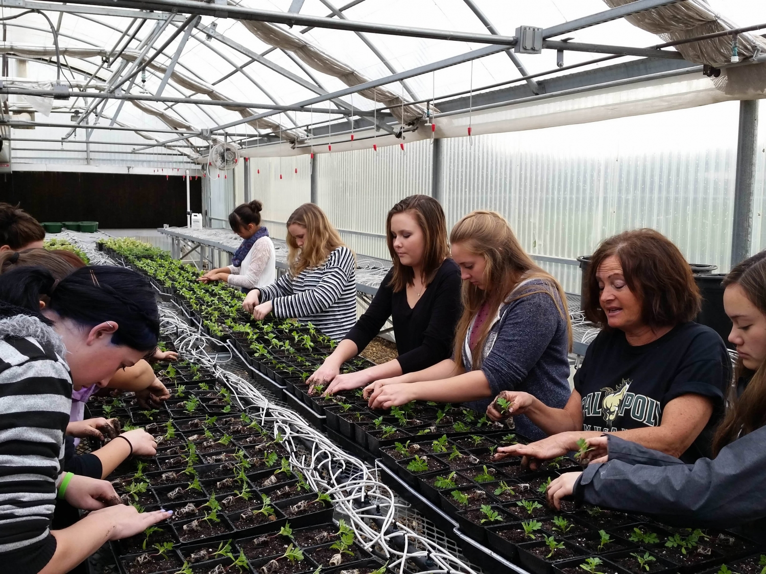 Agriculture Program at Bret Harte Union High School | Trevor Airola