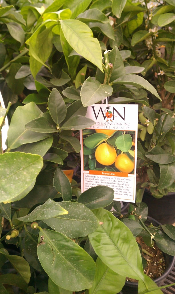 Willits & Newcomb, Inc. | Commercial Greenhouse Manufacturer