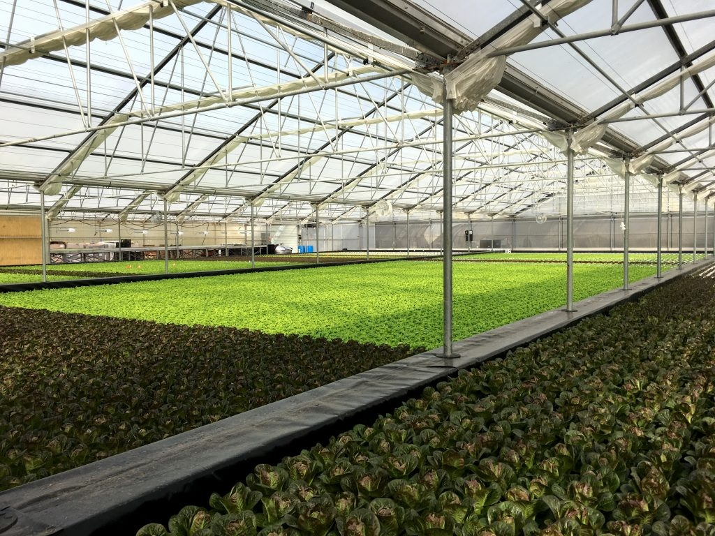 Deep Water Culture in Solar Light Greenhouse at OKU Nursery | Suncrest USA